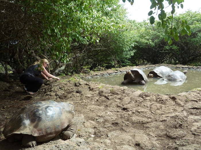 conservation volunteering in Ecuador