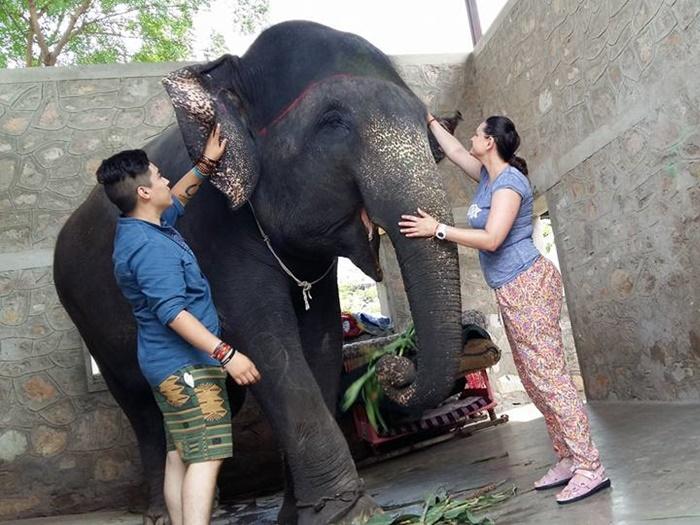 volunteer with elephants in India