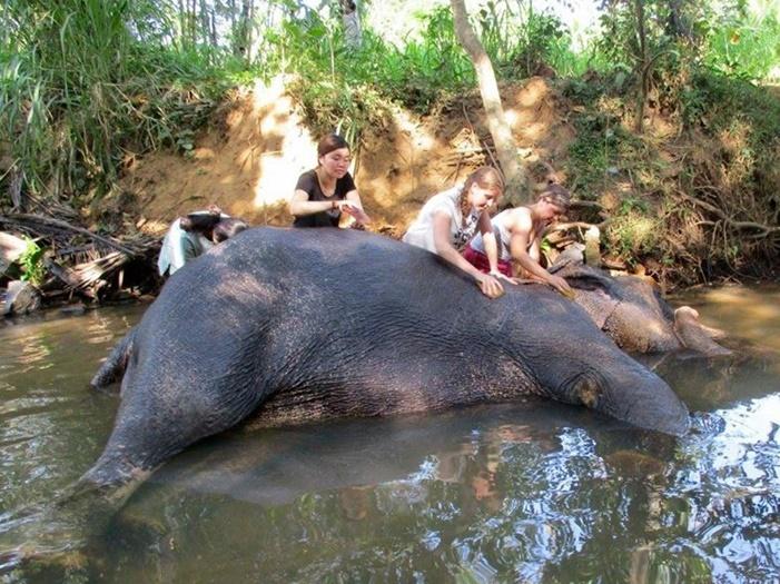 volunteer with elephants in Sri Lanka
