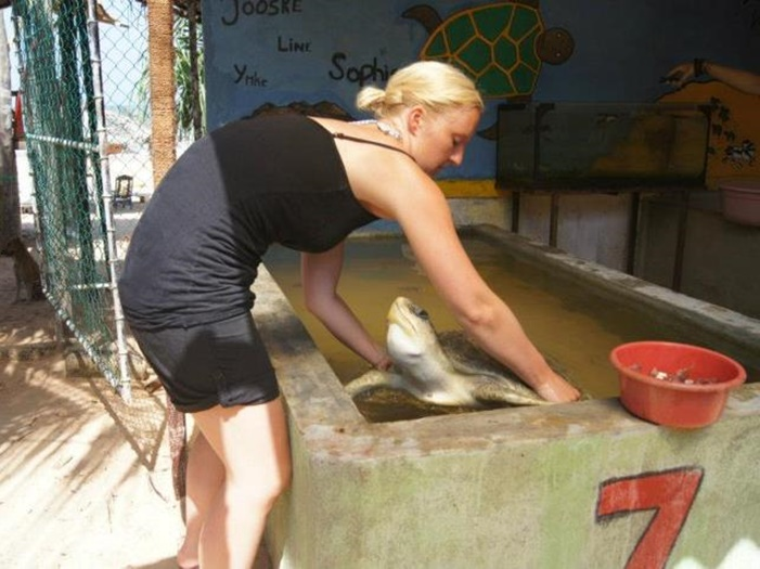 volunteer with sea turtles in Sri Lanka