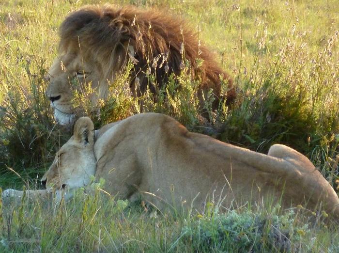 wildlife volunteer work in South Africa
