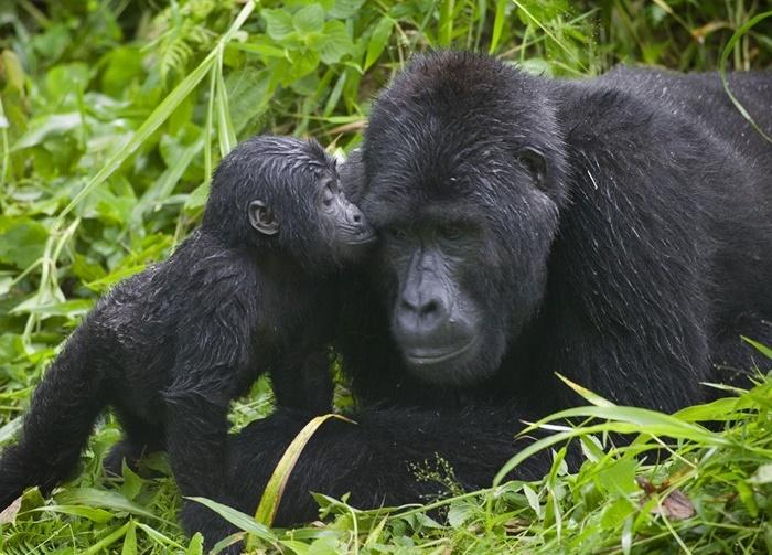 Bwindi National Park Uganda