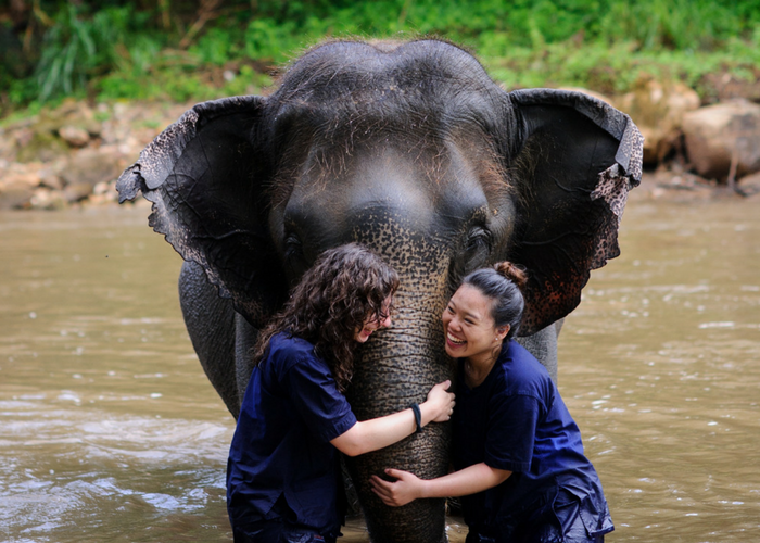 Thailand elephant volunteer project