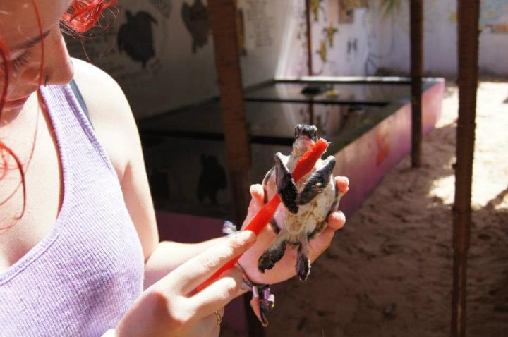 turtle conservation volunteering abroad