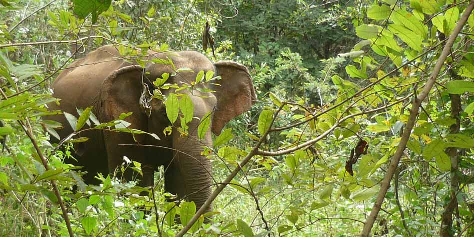 jungles and varied wildlife cambodia