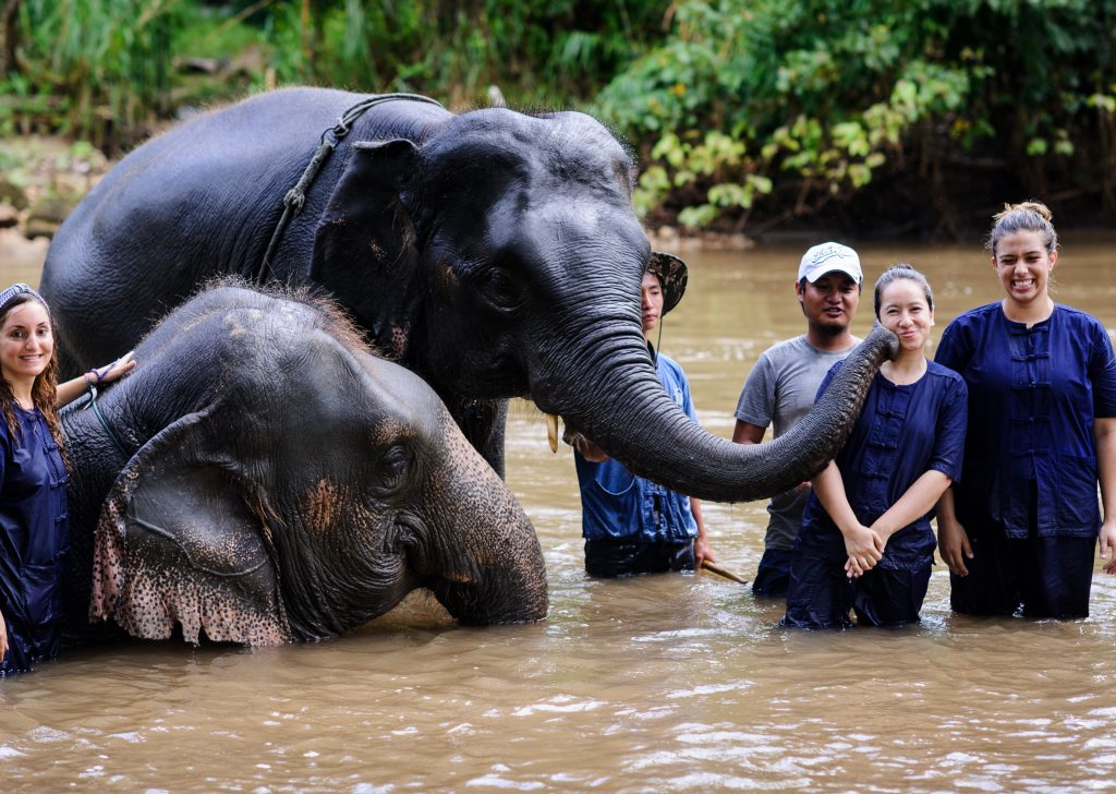 volunteer at an elephant village in Chiang Mai
