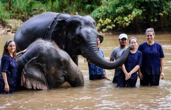 10 Steps To Become A Volunteer For A Wildlife Conservation Project in 2021 – 2022