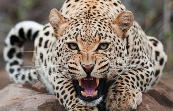 Be A Part Of Wildlife Conservation Projects – Volunteer Abroad With Animals
