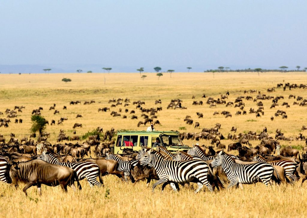 Witness The Great Wildebeest Migration