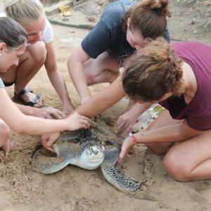 Los mejores programas de voluntariado con tortugas marinas para 2021