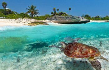 7 Things You Must Do While Volunteering In Zanzibar