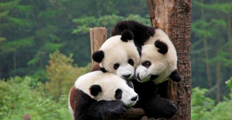 Giant Panda House of Beijing Zoo