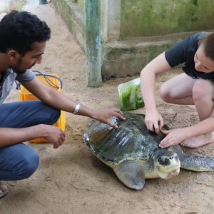 10 Best Places To Volunteer Abroad With Animals in 2021 – 2022