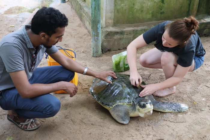 10 Best Places To Volunteer Abroad With Animals in 2020