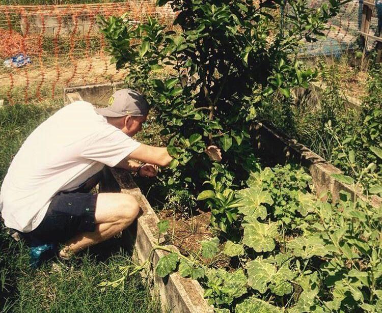 Urban Gardening brazil