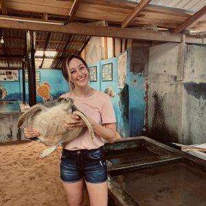 Affordable Sea Turtle Conservation Volunteer Programs Abroad