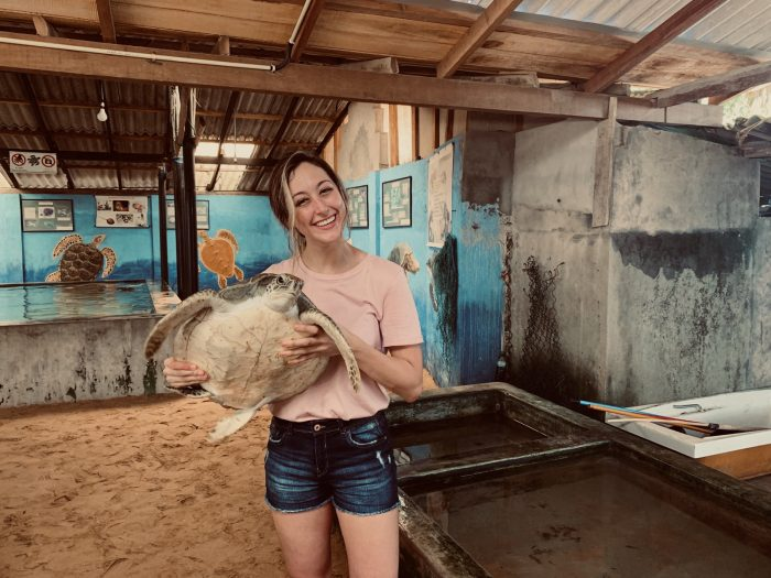 Affordable Sea Turtle Conservation Volunteer Programs Abroad